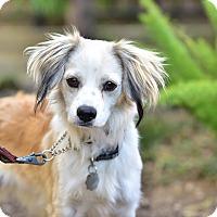 Adopt A Pet :: Parker - Santa Monica, CA