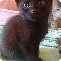 Adopt A Pet :: Mortisha - Trevose, PA