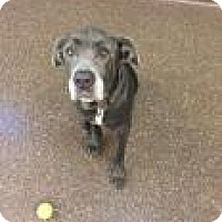 Adopt A Pet :: Tiny 671A - Columbus, GA
