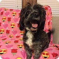 Adopt A Pet :: Shortcake - Lindale, TX