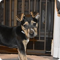 Adopt A Pet :: Athena - Spring, TX