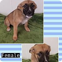 Adopt A Pet :: Esmeralda pending adoption - Manchester, CT