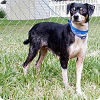Adopt A Pet :: Tina Turner - Rockport, TX
