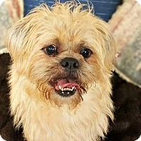 Adopt A Pet :: Stormy - Spartanburg, SC
