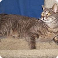 Adopt A Pet :: Hamelton - Colorado Springs, CO