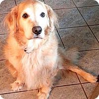 Adopt A Pet :: Nittany - Danbury, CT
