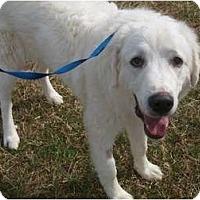 Adopt A Pet :: Louie - Arlington, TX