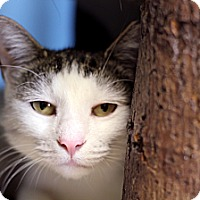 Adopt A Pet :: Lichtenstein - Chicago, IL