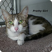 Adopt A Pet :: Pretty Girl - Dover, OH