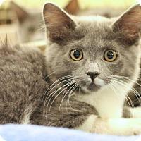 Adopt A Pet :: Brad Kitt - Sacramento, CA