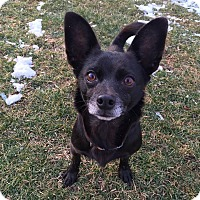 Adopt A Pet :: Sparkie - Wappingers, NY