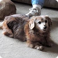 Adopt A Pet :: Max - San Antonio, TX