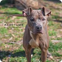 Adopt A Pet :: Pearl - Edwardsville, IL