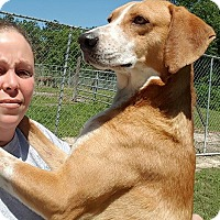 Adopt A Pet :: Boomer - Hammond, LA