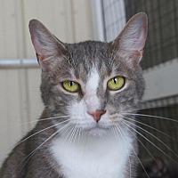 Adopt A Pet :: Carlisle - New Bern, NC