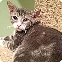 Adopt A Pet :: Paisley - East Hanover, NJ