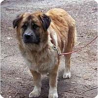 Adopt A Pet :: Quincy - Winnsboro, SC