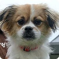 Adopt A Pet :: Red - white settlment, TX