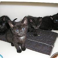 Adopt A Pet :: Miney & Mo - Ludington, MI