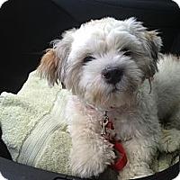 Adopt A Pet :: Bruno - Davie, FL