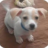 Adopt A Pet :: Coconut - Phoenix, AZ