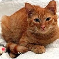 Adopt A Pet :: Sonny - Alexandria, VA