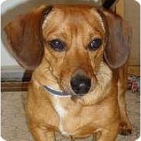 Adopt A Pet :: PENDINGAstro - Toronto/Etobicoke/GTA, ON