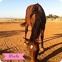 Adopt A Pet :: Mocha - Elverta, CA