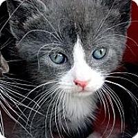 Adopt A Pet :: Pinky - Barnegat, NJ