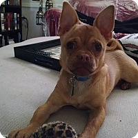 Adopt A Pet :: Sassy (F.K.A. Tara) - Morgan Hill, CA