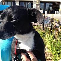 Adopt A Pet :: *URGENT* Willow - Van Nuys, CA