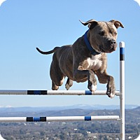Adopt A Pet :: Mac - Valley Springs, CA