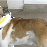 Adopt A Pet :: Blue - Wytheville, VA