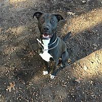 Adopt A Pet :: Finnegan - Brookhaven, NY