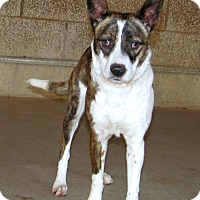 Adopt A Pet :: Riri - Ruidoso, NM