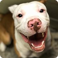 Adopt A Pet :: Prince - Pinehurst, NC