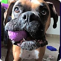 Adopt A Pet :: BOGEY - Boise, ID