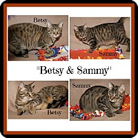 Adopt A Pet :: Betsy & Sammy -Spayed/Neutered - Marietta, OH