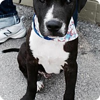 Adopt A Pet :: Duke - Houston, TX