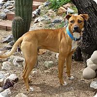 Adopt A Pet :: RIGEL / Courtesy Posting - Tucson, AZ