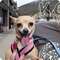 Adopt A Pet :: KC - Newport, KY