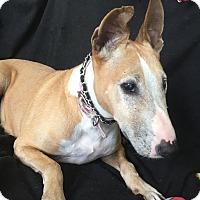 Adopt A Pet :: LULU - Spring, TX