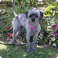 Adopt A Pet :: TESSIE - Newport Beach, CA