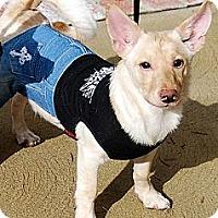 Adopt A Pet :: Archie - Irvine, CA