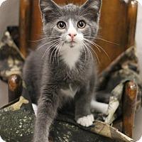 Adopt A Pet :: Wilbur - Sacramento, CA