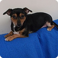 Adopt A Pet :: Camilla - Muskegon, MI