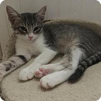 Adopt A Pet :: Tortilla - Bulverde, TX