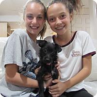 Adopt A Pet :: Cuddles - Randolph, NJ