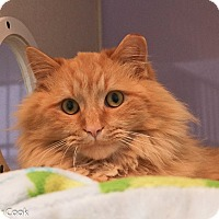 Adopt A Pet :: Ron Festivus - Ann Arbor, MI