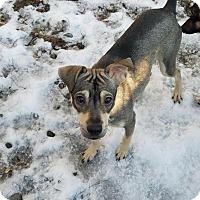 Adopt A Pet :: Nik - Freeport, ME